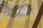 看看花山节为什么要树花杆?