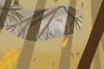 胎梦大全:孕妇梦见一只金凤凰是什么意思?