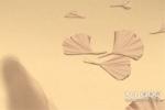 范冰冰的婚姻树叶子是什么颜色?范冰冰的婚姻树好不好?