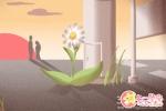 兰花梅雨季节如何管理才能够真正的成长?
