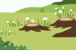 小发财树的养殖方法和注意事项