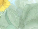 喝绿茶有哪些作用呢|绿茶作用介绍