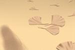 这些生肖向往的生活是闲云野鹤自悠游
