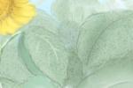 新房养花风水禁忌 养花的风水知识