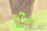 10朵百合花语是完美的爱情吗