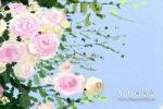 光棍节鲜花选择 送什么鲜花好