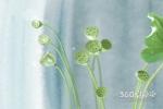 揭秘15朵康乃馨花语是什么