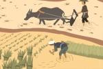 羌族文化 羊文化对生活的影响