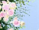 幸福树花语大全之家庭幸福