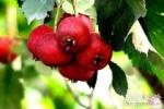 秋季养生吃什么 让气色便红润