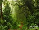 """未解之谜走进罗马尼亚的""""百慕大森林"""""""