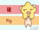 属猪的人梦寐以求的爱情是怎么样的